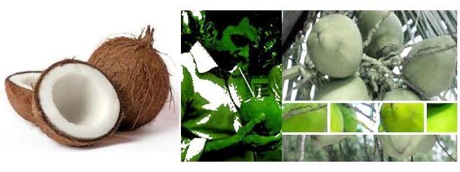Coconat-Nutrition
