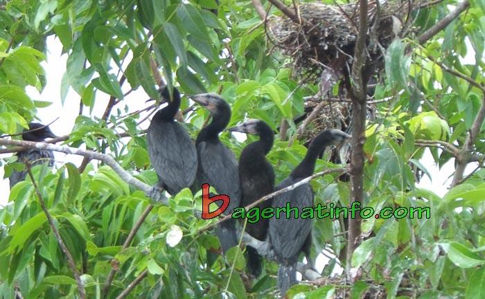 Birds-in-Bagerhat-01