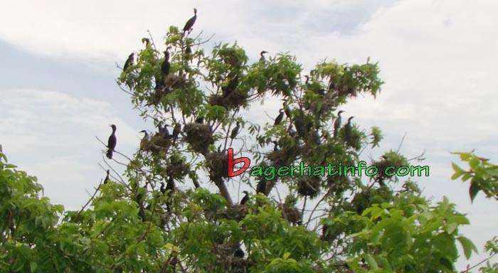 Birds-in-Bagerhat-02
