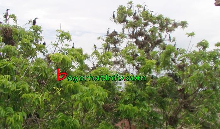Birds-in-Bagerhat-03