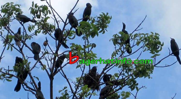 Birds-in-Bagerhat-04