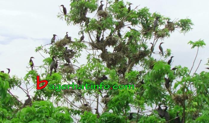 Birds-in-Bagerhat-05