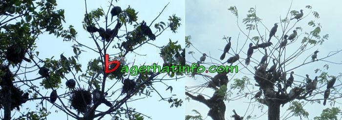 Birds-in-Bagerhat-06
