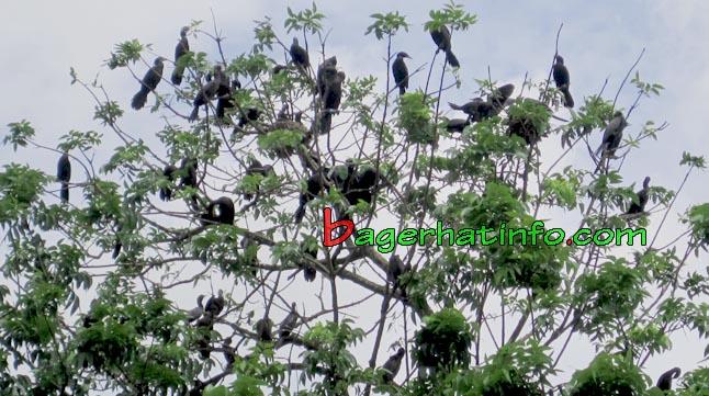 Birds-in-Bagerhat-07